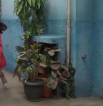 Plantas tapando o clubinho dos dpa