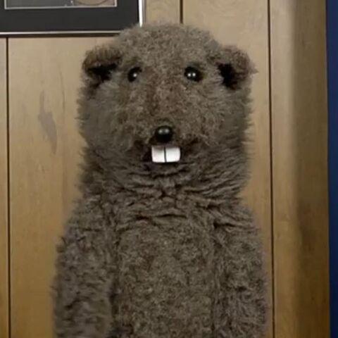 File:Fafa the Groundhog.jpg