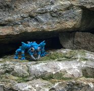 Flora Cralwer on the rocks