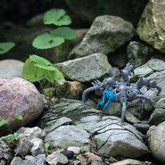 Stone Crawler in nature
