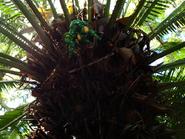Argen9-plants2