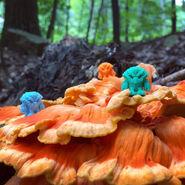 Crayboth-OrangeMushroom