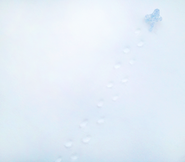 Ice-Walker-8-WEB