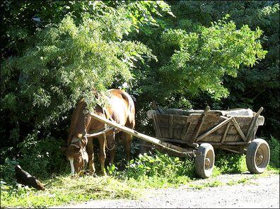 29-HorseAndWagon