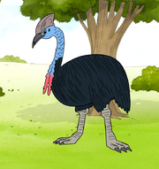 S6E24.099 Double-Wattled Cassowary