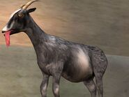 Normal Goat
