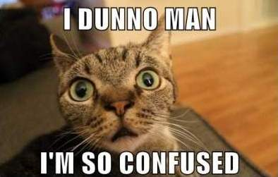 File:Confused-Cat-Meme-2.jpg