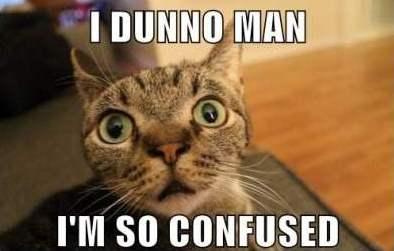 File:Confused-Cat-Meme-2.jpg