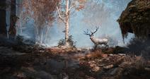 El ciervo en el bosque