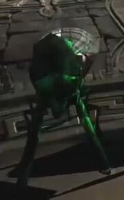 Megeara's bug