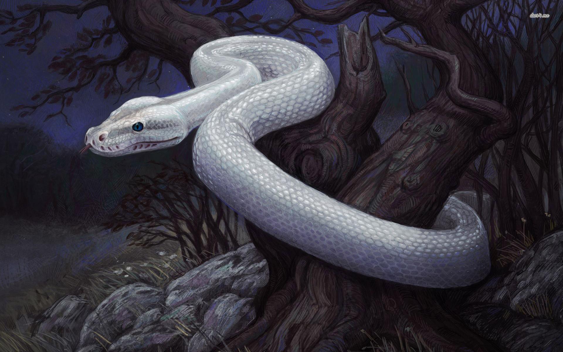 White Snake On Tree Wallpaper Artistic Wallpapers Full Hd Download Horror For Pc Desktop Dangerous Mobile Iphone Android