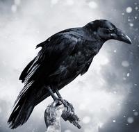 Raven Cait