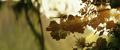 Kong Skull Island - Rise of the King Trailer - 00005
