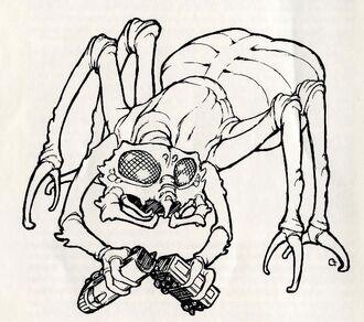 Arachnis ccc