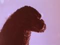 GVMTBFE - Godzilla Comes from the Fuji Volcano - 10