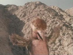Totzaurusu