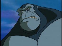 Kong TAS
