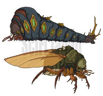Megapede and Cicada