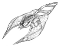 Concept Art - Rebirth of Mothra 2 - Aqua Mothra 10