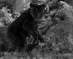 Giant cave bear