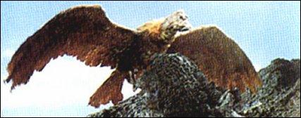 File:The Giant Condor.jpg