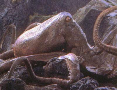 giant octopus gojipedia fandom powered by wikia
