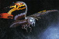 Mothra mill2 imago