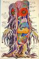 Hedorah Anatomy