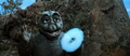 All Monsters Attack - Minya Minilla ShodaiMinira Fires Smoke Ring