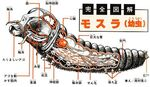 Biology of Mothra
