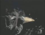 Obelisk Island Bird