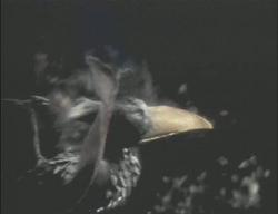 Obelisk Bird
