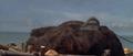 King Kong vs. Godzilla - 31 - King Kong Wakes Up