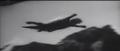 Gliding -=- Flying