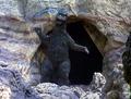 ZF - Episode 21 Godzilla's Cave