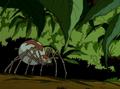 Baby GMW Spider