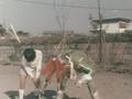 Go! Greenman - Episode 2 Greenman vs. Antogiras - 4 - Have no fear, Greenman is here