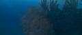 Godzilla vs. Megaguirus - CGI Godzilla