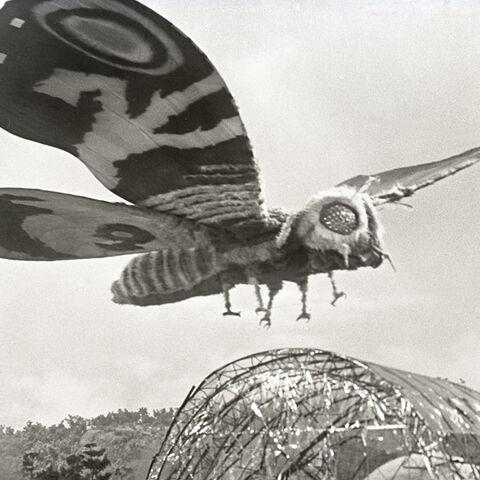 File:Godzilla.jp - 4 - ShodaiMosuImago Mothra 1964.jpg