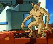 Fennac Fox Jason