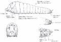 Concept Art - Godzilla Tokyo SOS - Mothra Larva 1