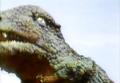 Go! Godman - Episode 6 Godman vs. Gorosaurus - 12 - I enjoy this sky, this sky is nice