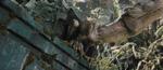 Venatosaurus6