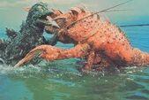 Ebirah VS Godzilla