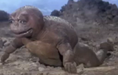 Son of Godzilla 1 - Newly hatched Minilla (1)