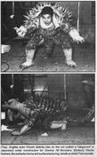Anguirus Suit Before Built