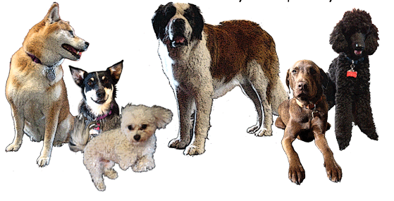 File:Dogs.png