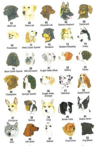 File:Dog breeds .jpg