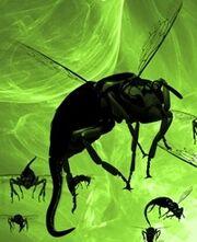 Plague cover - bugs