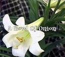 A Bowl Of Onion